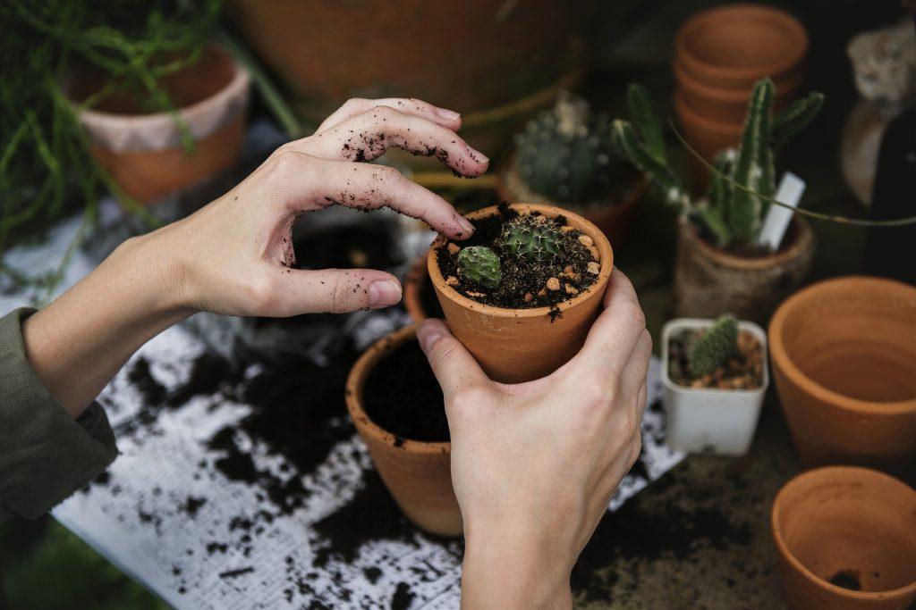 plante jardinage potager en ville